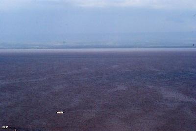 Lake Naivasha, Purple