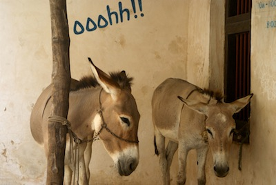 Donkeys on Lamu