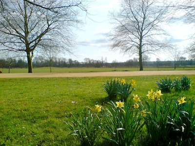 Daffodils in Christ Church Meadow