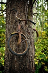 Tree bicycle.jpg