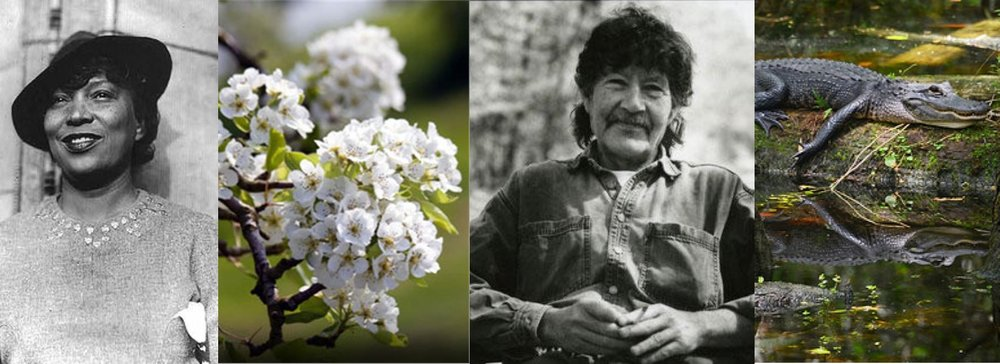 Zora Neale Hurston, pear blossoms, William Gay, Everglades gator