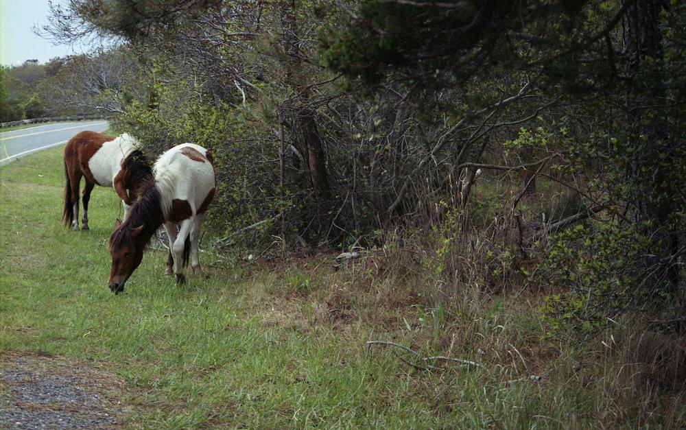 pony4-copy.jpg
