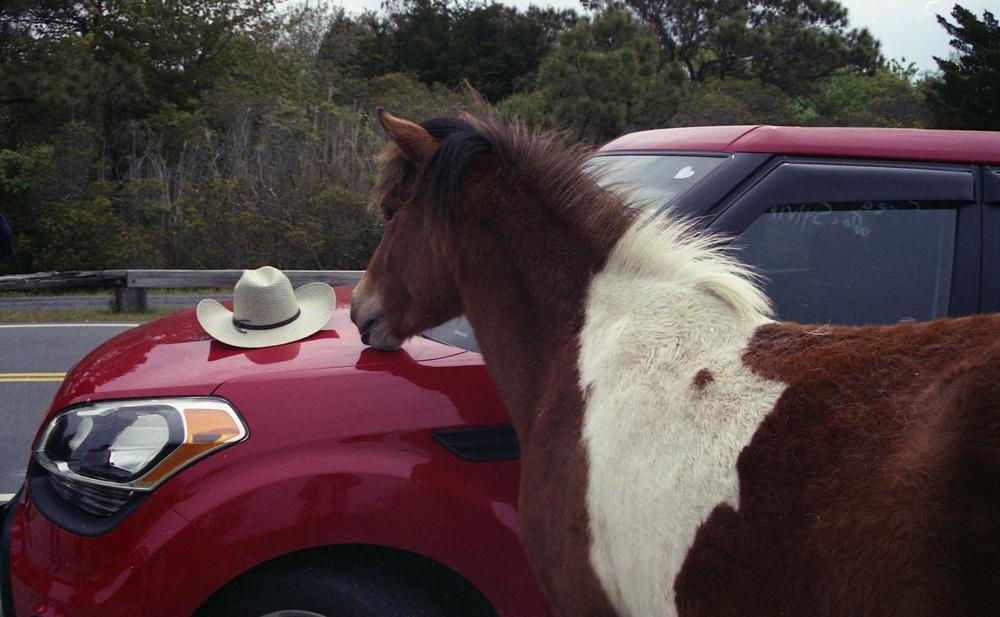 pony11.jpg