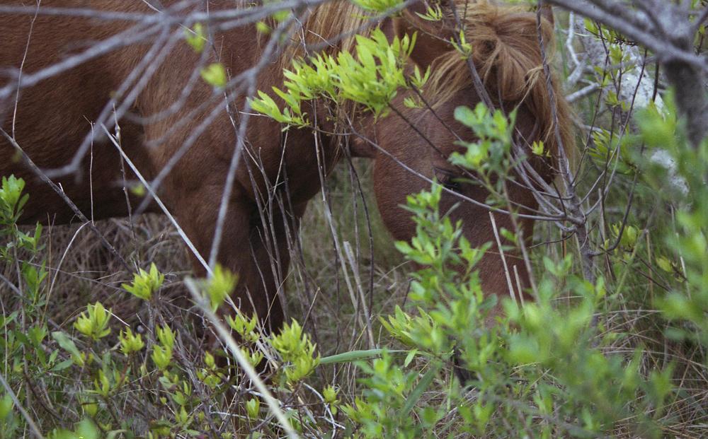 pony13.jpg