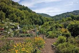 The beautiful Hidden Villa Organic Farm.