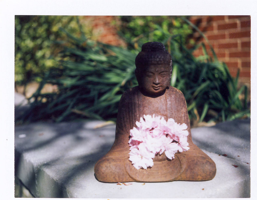 56 Buddha and the Cherry Blossoms.jpg