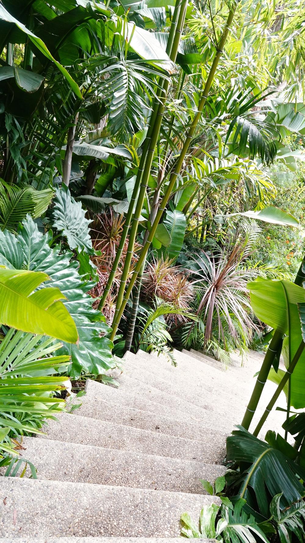 sheats-goldstein-residence-garden.jpg