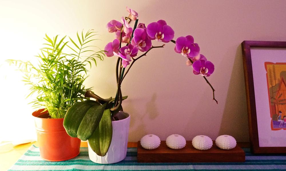 studio-orchid.jpg