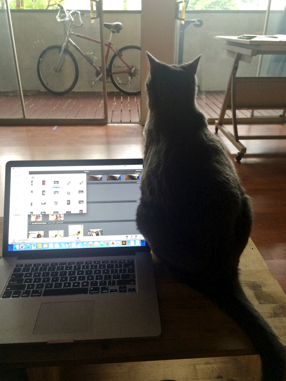 cat-sitting-laptop.jpg