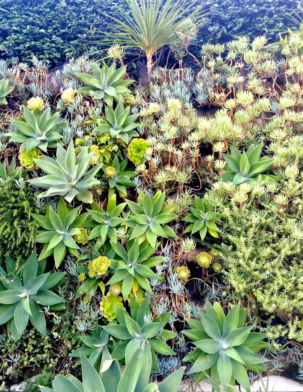 smogshoppe-succulent-wall.jpg