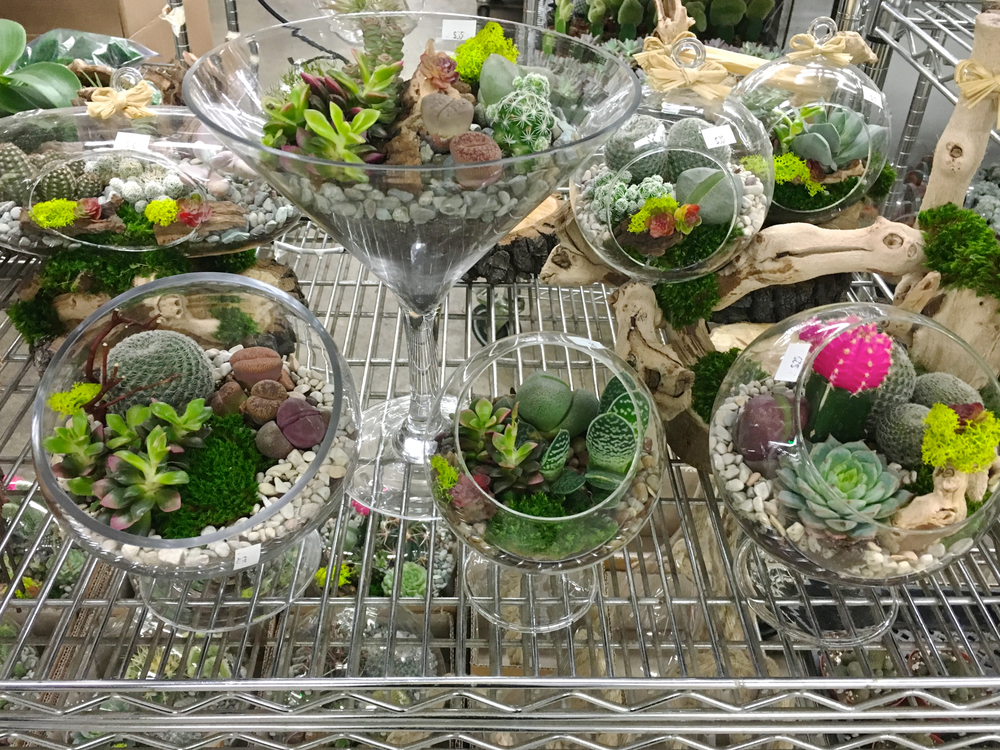 la-flower-market-succulents.jpg