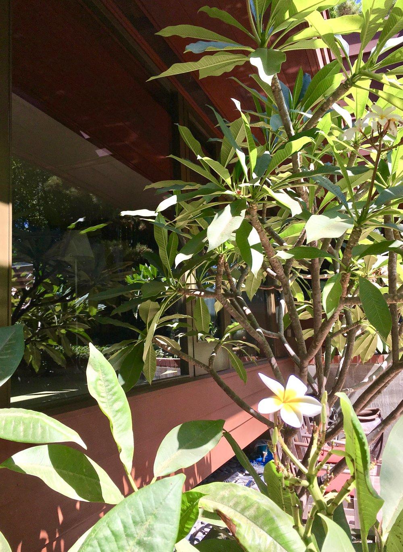 birtcher-share-house-landscaping.jpg