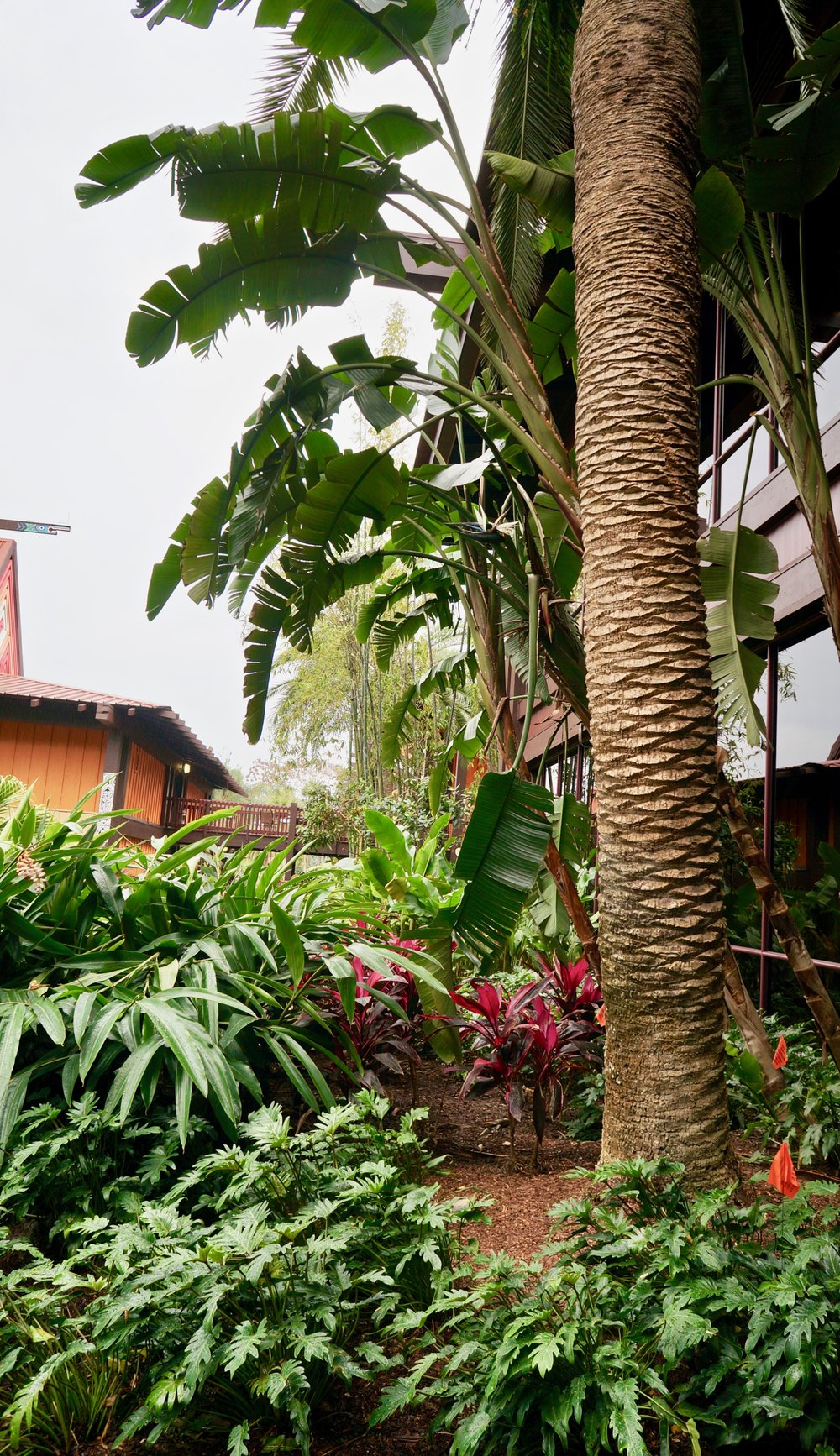 polynesian-palm-trees.jpg