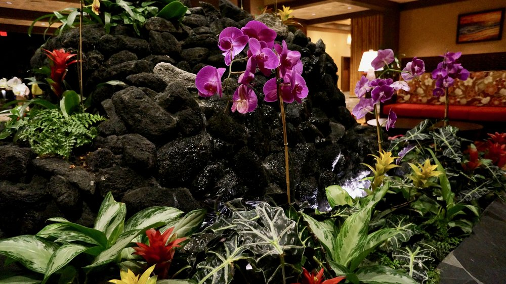 polynesian-fountain-orchids.jpg