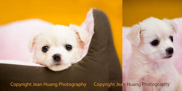 Copyright Jean (Jiaying) Huang