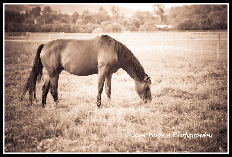 Grazing Horse - ©Jean Huang Photography