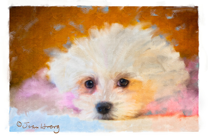 Hybrid-Photography-Oil-Painting-of-a-Pet-Dog-©Jean-Huang-Photography