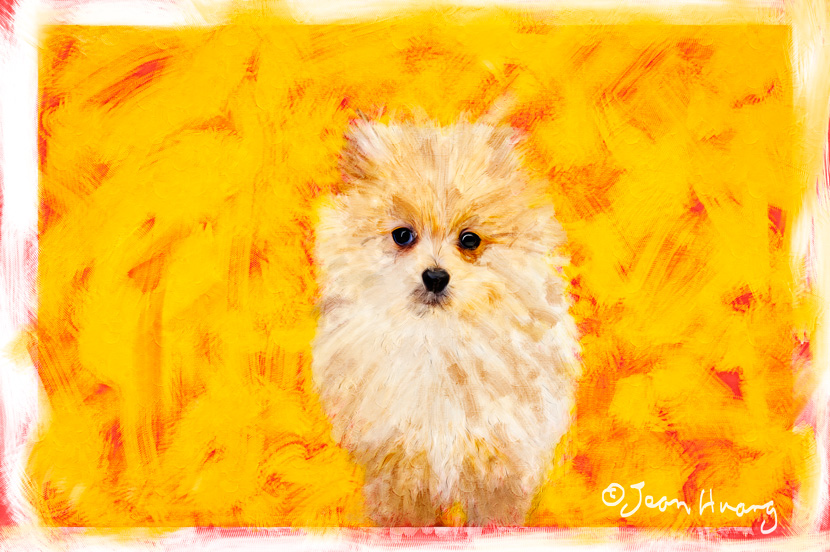 Hybrid-Photography-Oil-Painting-of-a-Puppy-©Jean-Huang-Photography