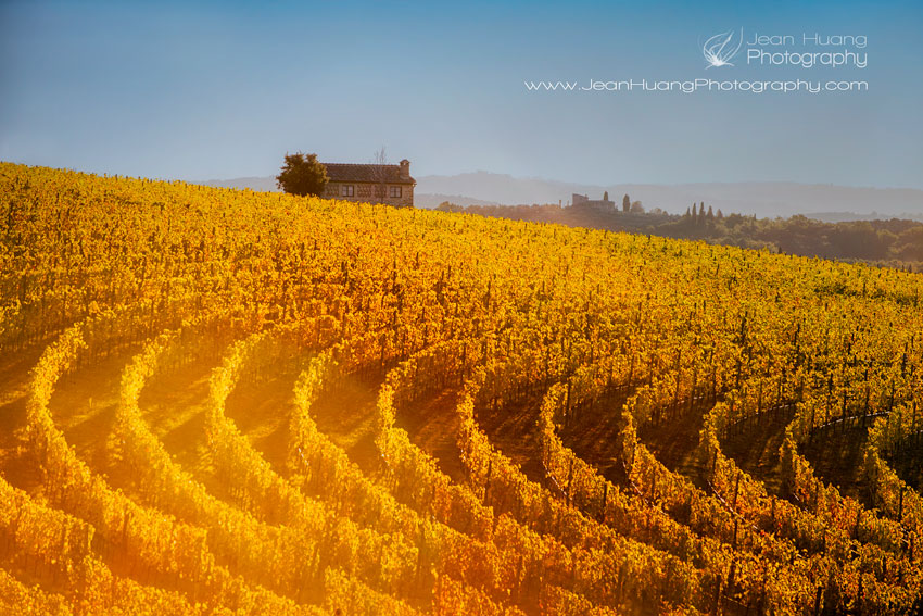 Vineyard-San-Gusmè-Italy-Copyright-Jean-Huang-Photography