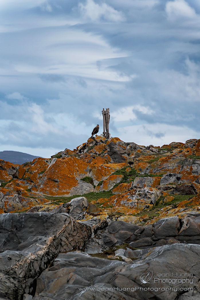 Crested-Caracara-Perched-on-Top-of-Hill-Beagle-Channel-Ushuaia-Argentina-Copyright-Jean-Huang-Photography