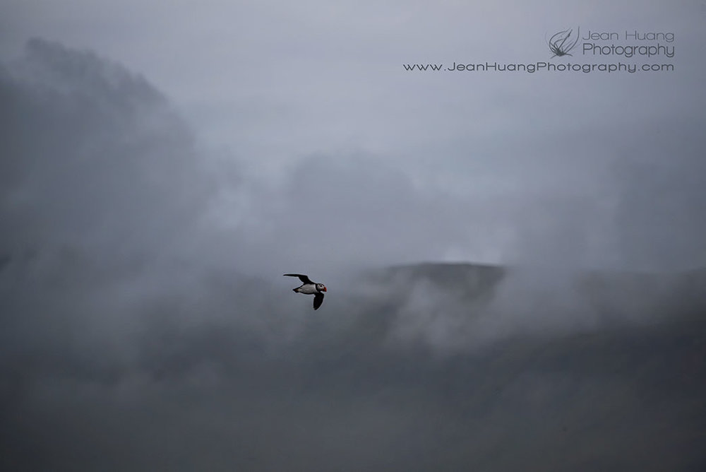 Puffin-Flying-through-Mountains-and-Clouds-Iceland-Copyright-Jean-Huang-Photography