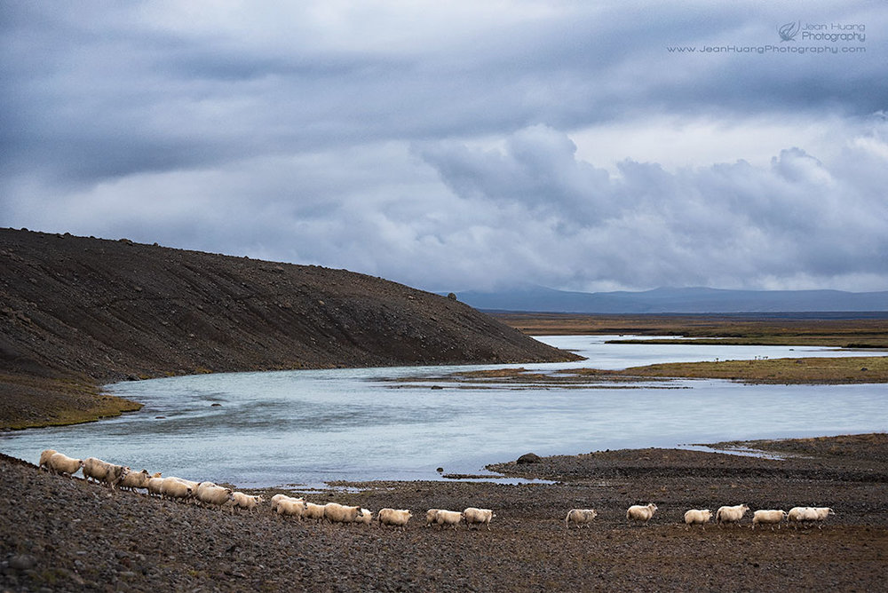 String-of-Sheep-Hvítárvatn-Iceland-Copyright-Jean-Huang-Photography
