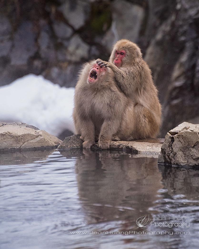 Macaque-Monkey-Crying-or-Enjoying-Jigokudani-Snow-Monkey-Park-Japan-Copyright-Jean-Huang-Photography