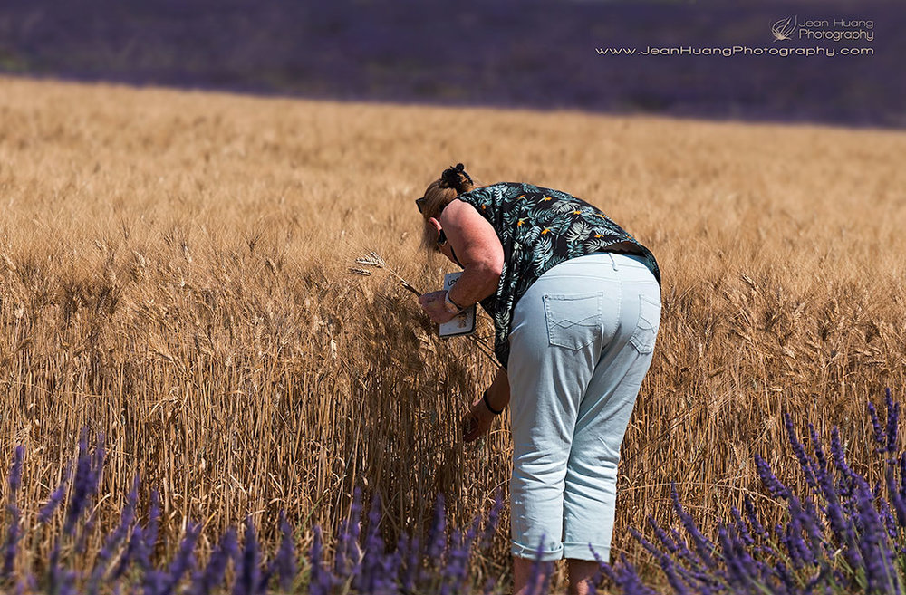 Tourist-Plucking-Wheat-Valensole-Provence-France-Copyright-Jean-Huang-Photography