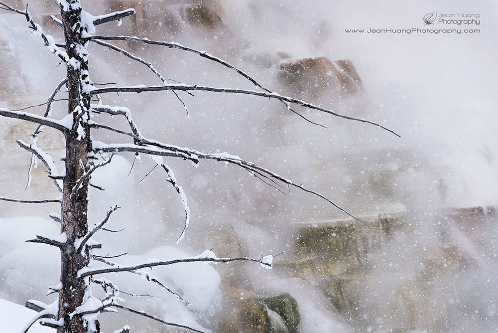 Dead-Tree-in-Snow-Canary-Springs-Yellowstone-National-Park-USA-Copyright-Jean-Huang-Photography