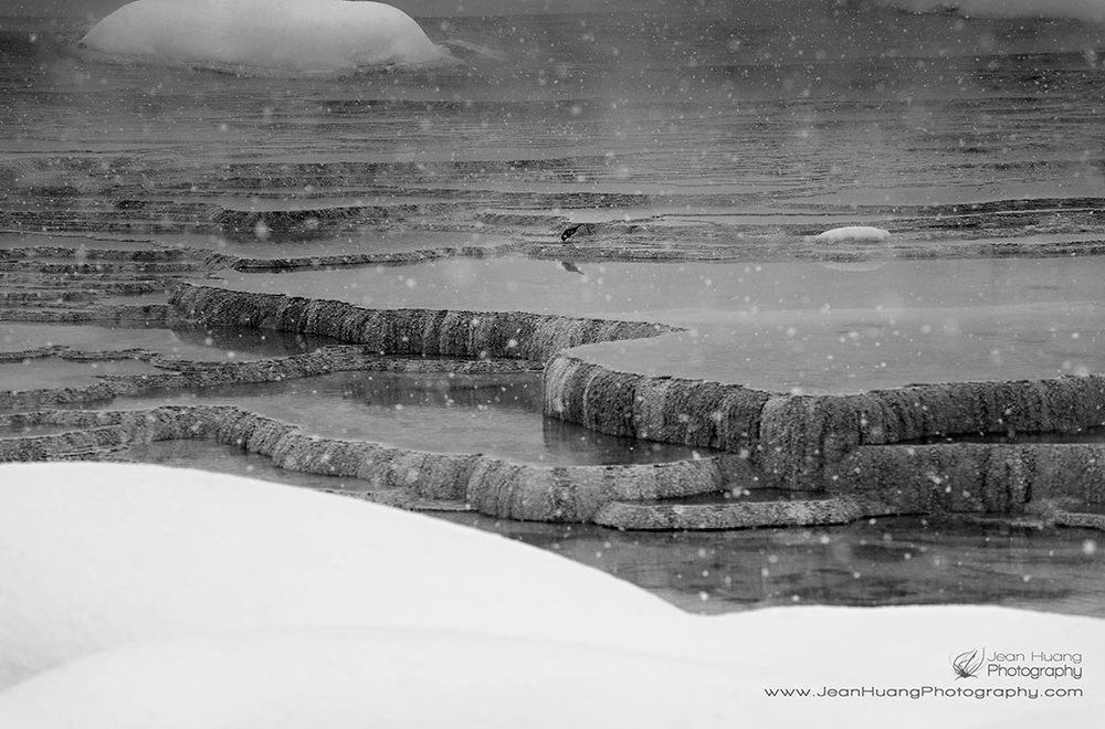 Small-Bird-in-Snow-Canary-Spring-Yellowstone-National-Park-USA-Copyright-Jean-Huang-Photography