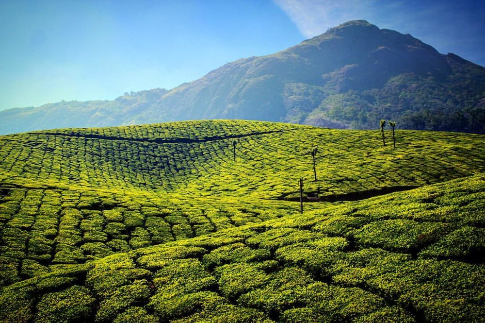 Not cool. I think someone slipped me a photoshop and now everything looks weird. — in Munnar.