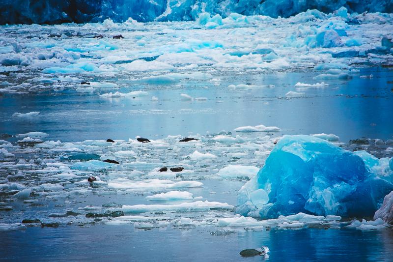 AlaskaCruise-tomeichphotographer-14.jpg