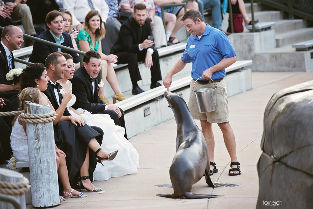 sea lion singing to bride and groom