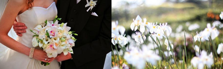 flowersandplaces.jpg