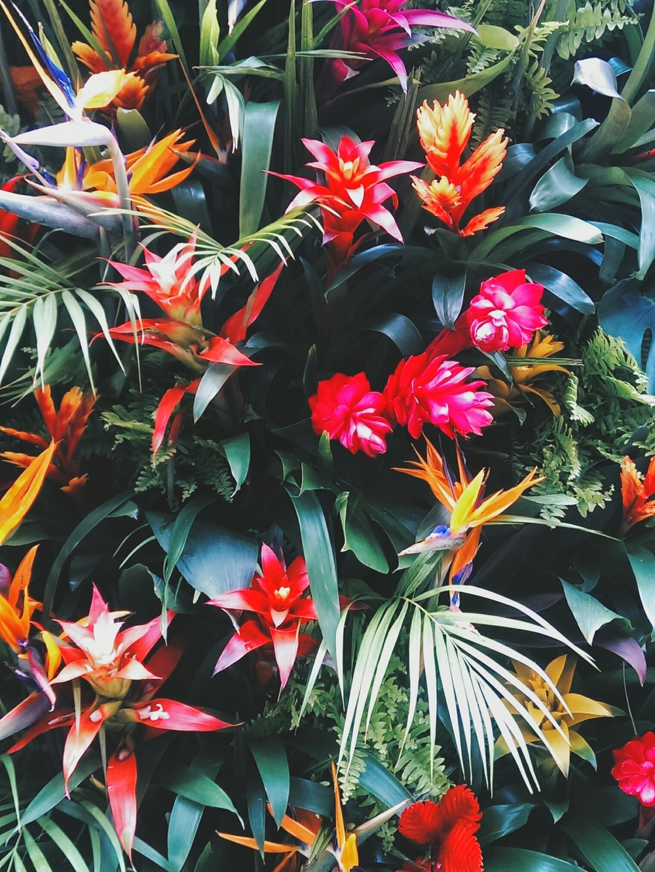 chelsea-in-bloom-1.jpg