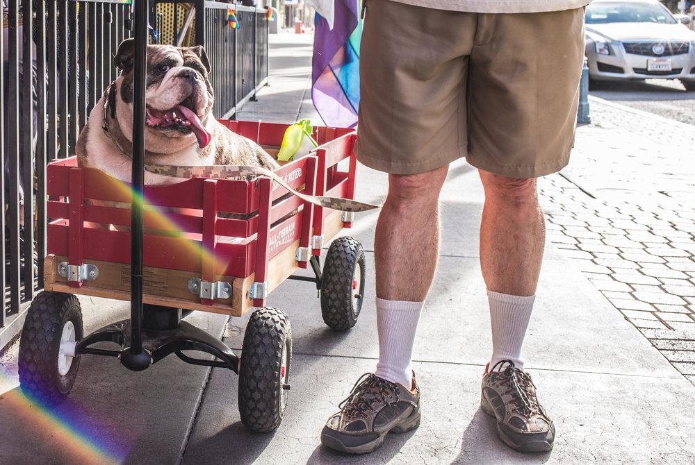 Red wagon dog.jpg