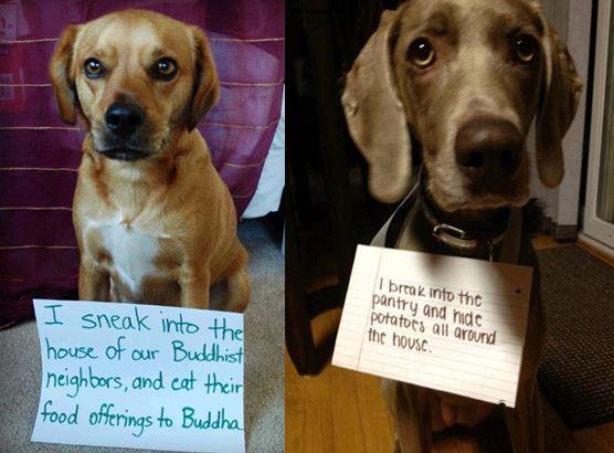shamed-dogs-pic.jpg