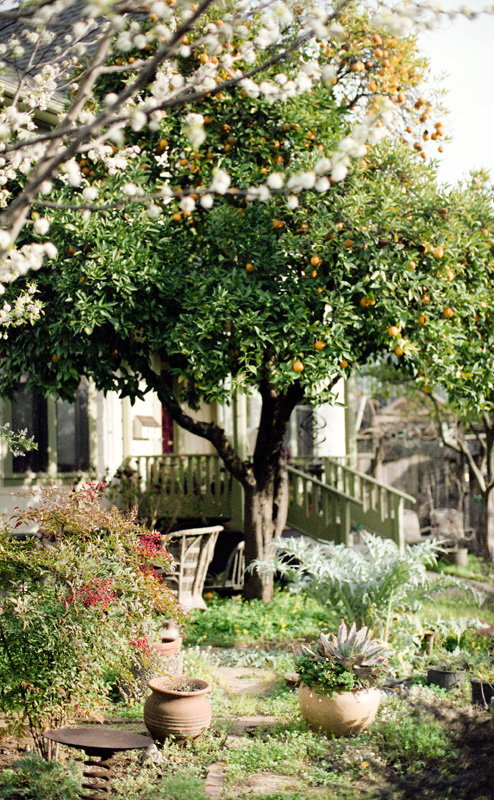 beautiful yard with orange tree