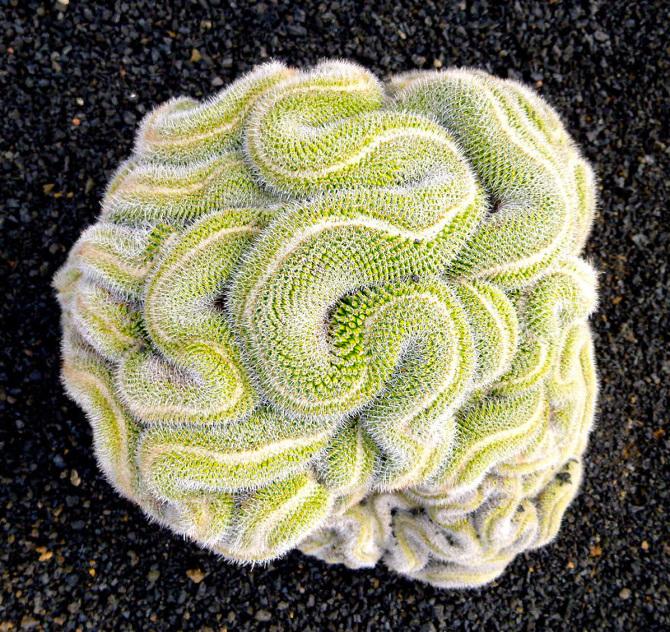 Thinking-Cactus_670.jpg