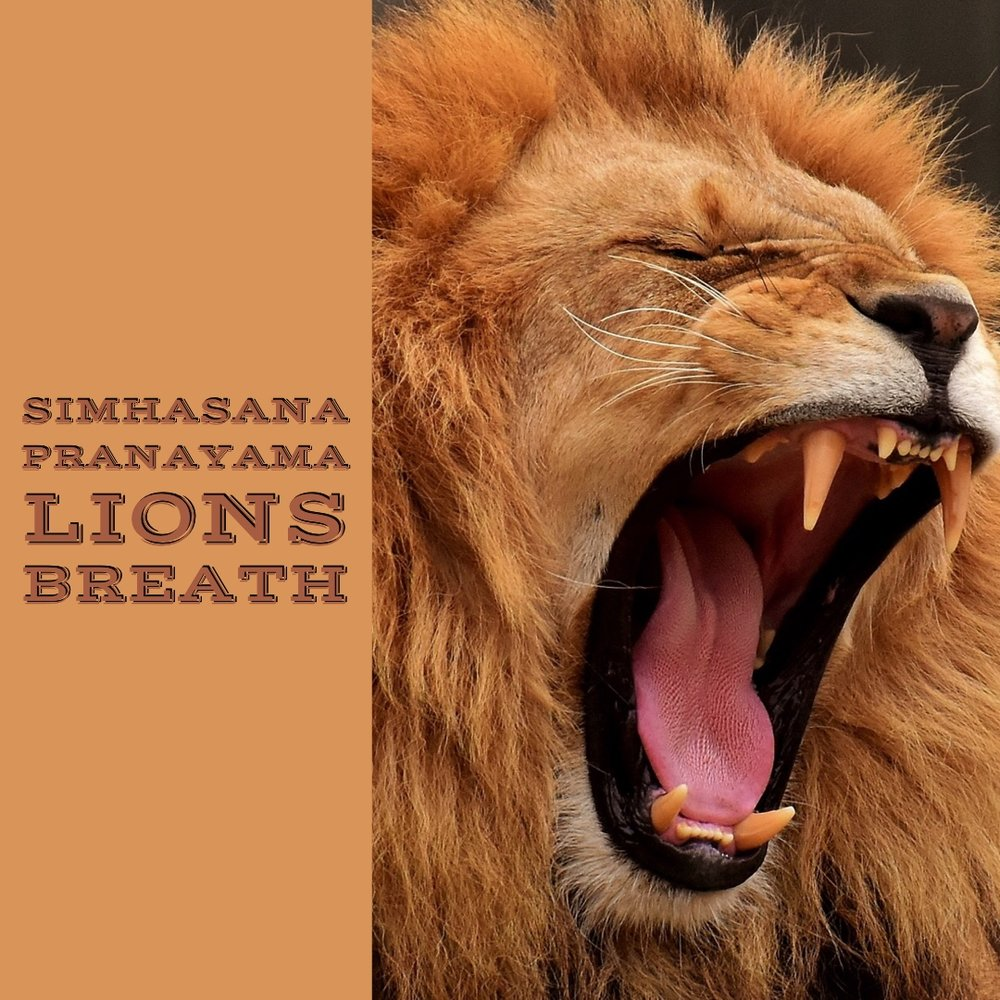 Lions Breath Thirteen Thieves