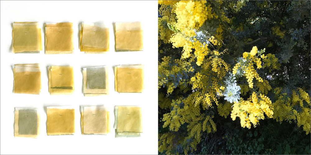 Golden Mimosa Swatches