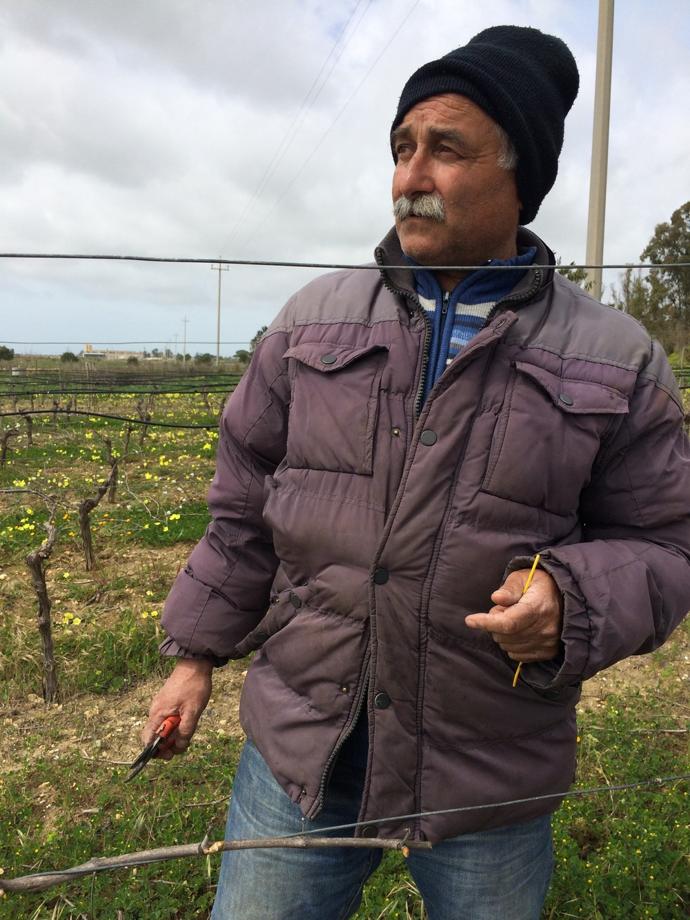 Vincenzo pruning his vines near Campobello di Mazara, Sicilia