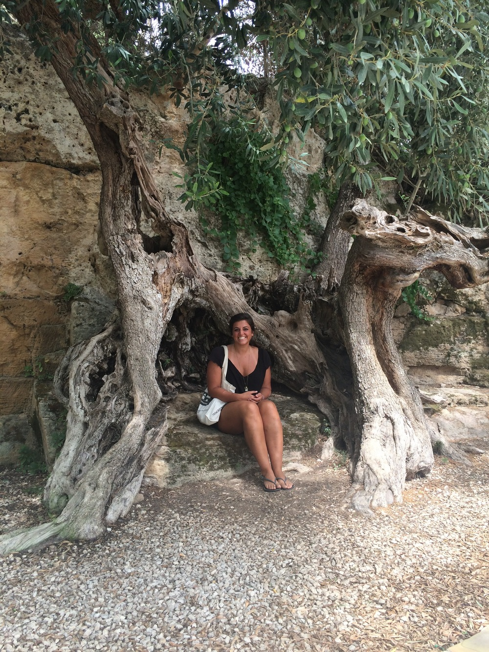 inside a 1200-year old olive tree in Castelvetrano|Selinunte Sicily, Italy