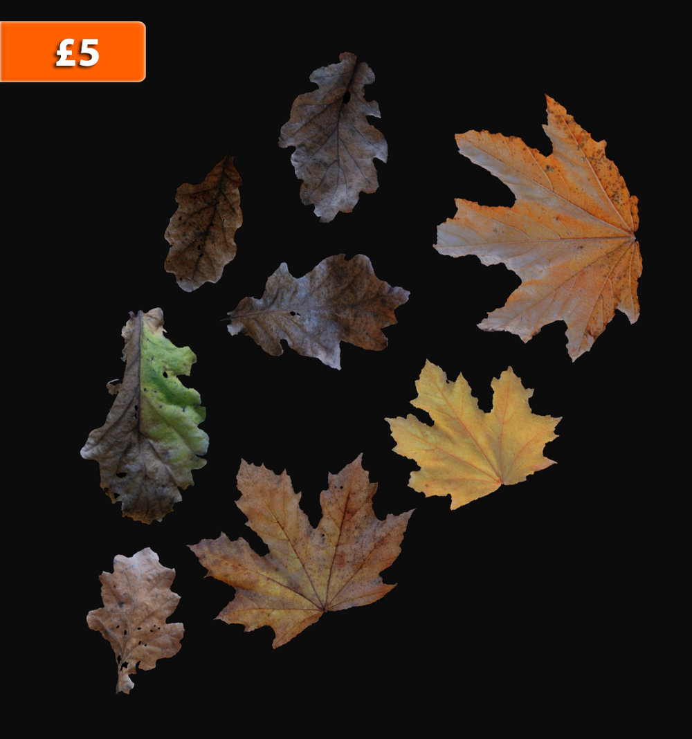 High Resolution Leaf Scan Pack!    8 x High Res Leaf Scans (as .obj format)    COL map included for each leaf
