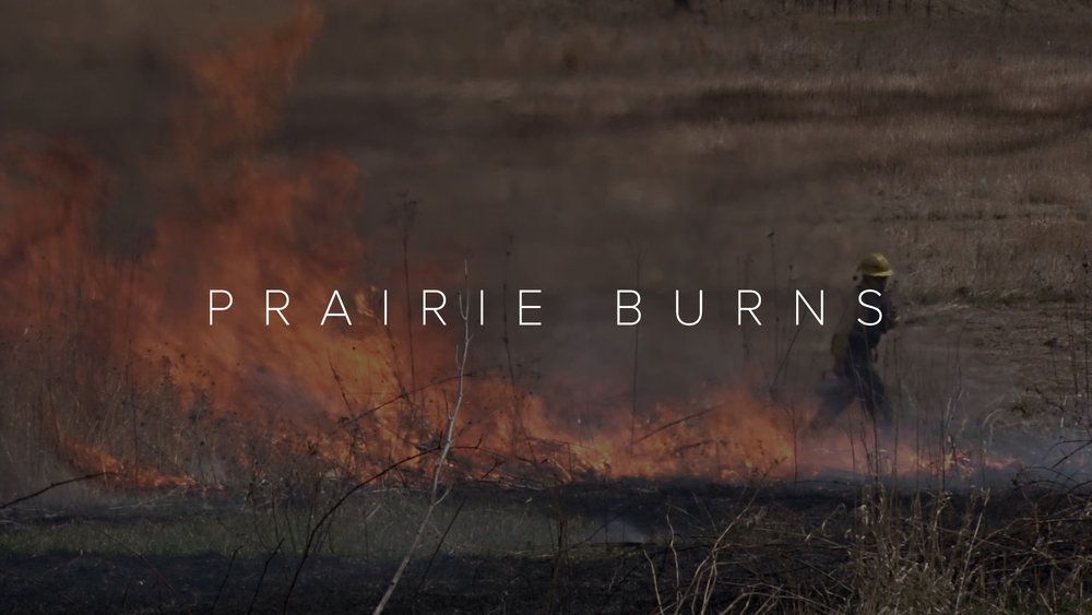 prairie burns - director, cinematographer2017 MDOCS Student Documentary Festival at Skidmore Official Selection2016 Pinney Library Mini Film Fest and guest lecture2015 Wisconsin Film Festival Official Selection
