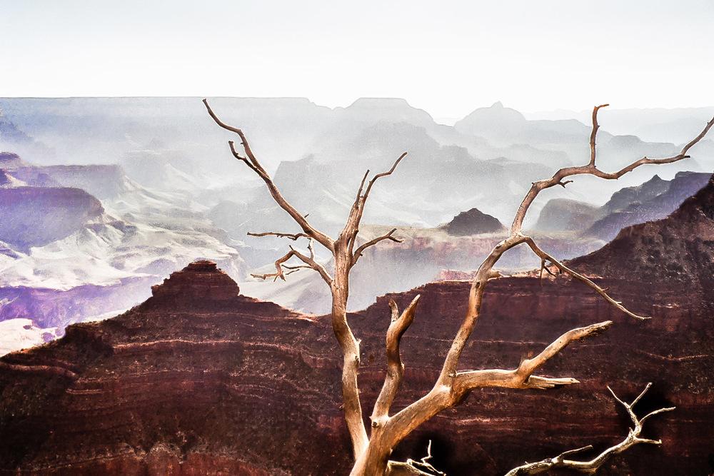 Lone Tree Grand Canyon
