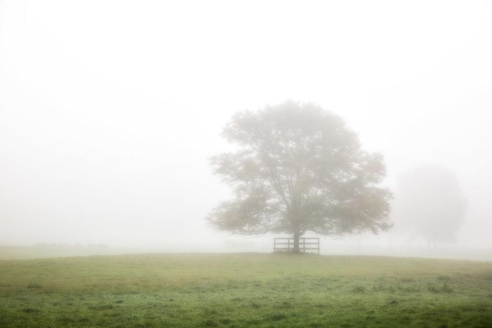 Field Fog Dover, Massachusetts