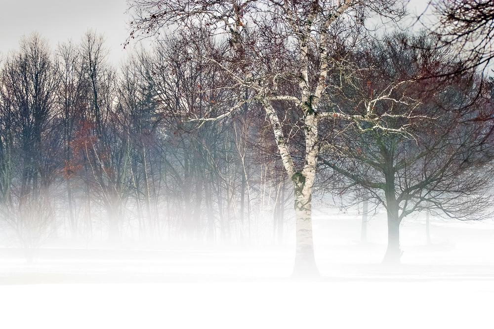 The Fog Rises Framingham, Massachusetts