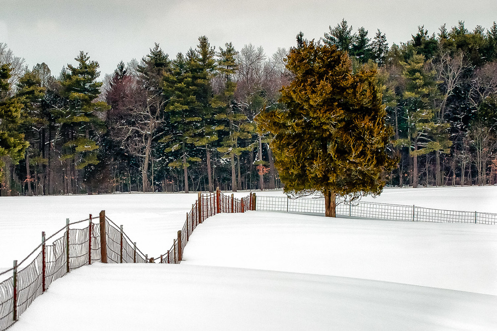 Snow Fence Sherborn, Massachusetts