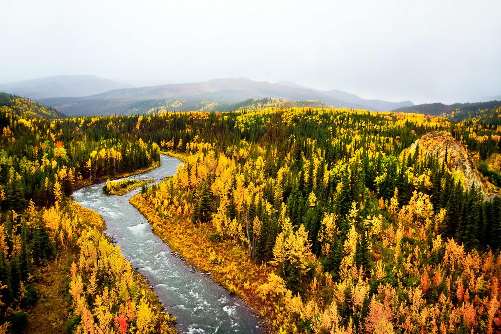 Toklat River Denali National Park, Alaska